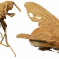 01-Real-size_Wasp_and_Fly_by_Bongobat_and_Hal_37d0b6be-d39a-4e4a-87cc-00460db417da_grande