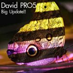 David Pro5