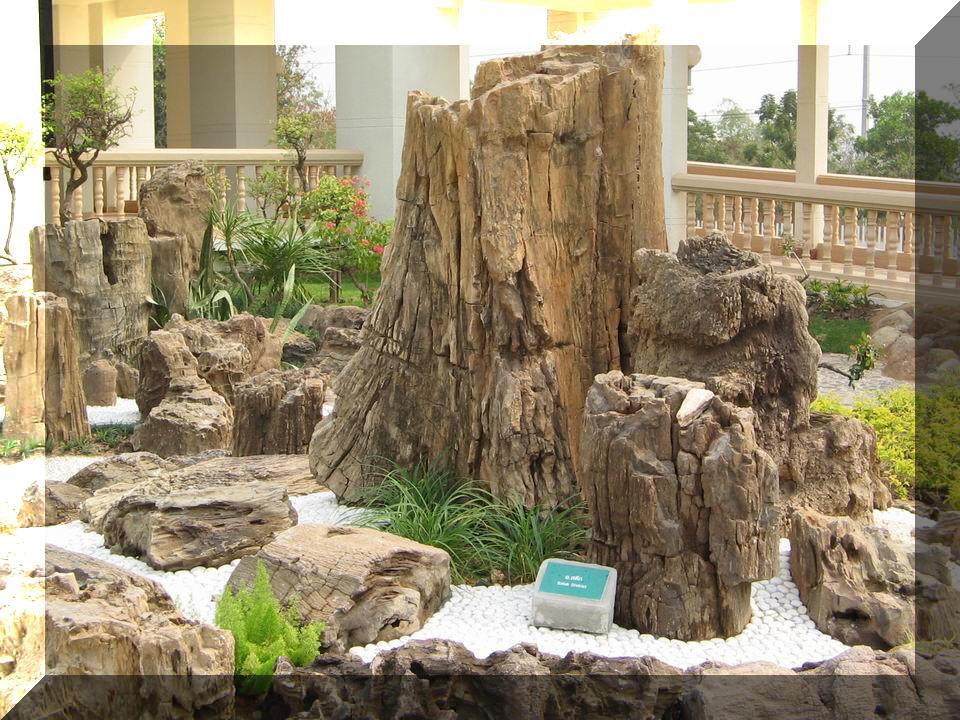 ลูกค้า: พิพิธภัณฑ์ไม้กลายเป็นหิน